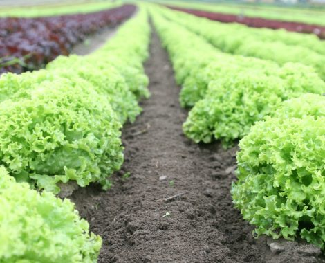 food-salad-field-fresh-89267